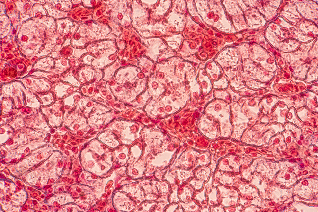 skin cells abstract image